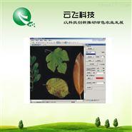 植物图像分析仪系统应用效果|价格|云飞科技