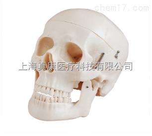 新型自然大头骨模型