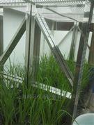 人工氣候室-水稻培養室型