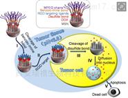 瑞禧生产叶绿素家族8种光敏剂小分子介绍