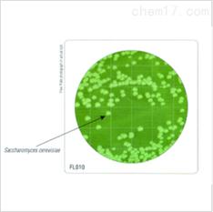 HiTouch™ 酵母和霉菌选择性计数平板
