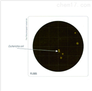 HiTouch™ 快速大腸菌群計數