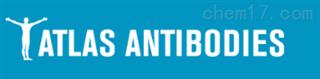 Atlas Antibodies授权代理