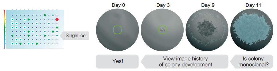 细胞生长分析系统