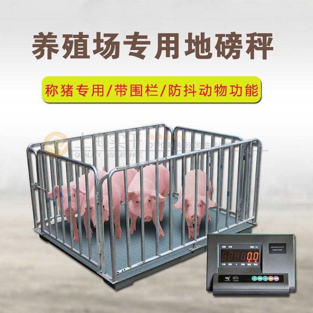 称猪用畜牧地磅